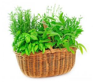 El poder de las plantas medicinales