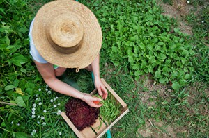 Plantas medicinales contra el insomnio de verano