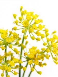 Plantas digestivas, una respuesta medicinal natural