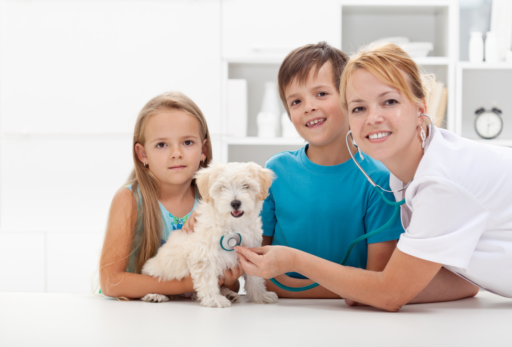 Kids taking their fluffy pet to the veterinary doctor for a checkup - copyspace