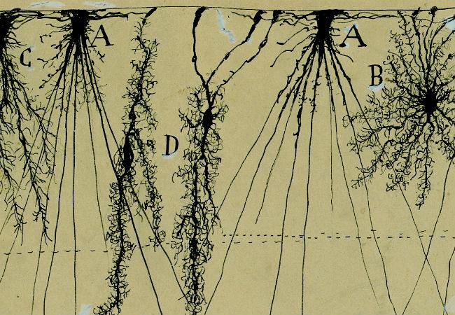 Santiago-Ramon-y-Cajal-Cambridge