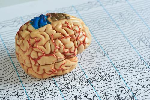 Brain model on EEG waves paper